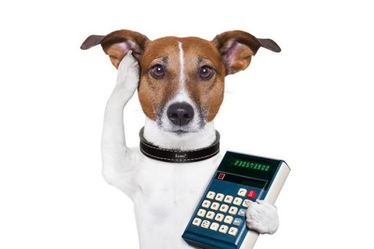 Dog Tax Accountant